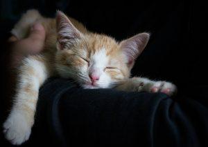 How I'm feeling -- sleepy