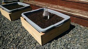 cedar planter boxes I built