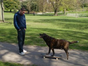 Dog claiming skateboard