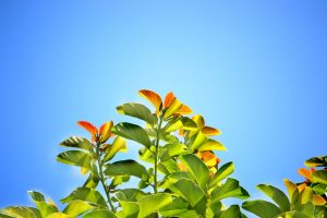 sunny blue sky with leaves